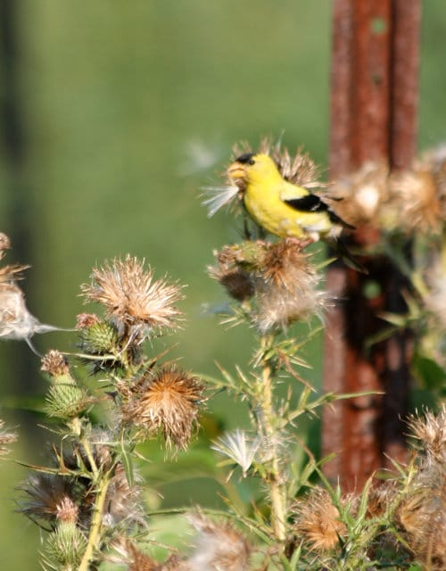 Bird perched on flower