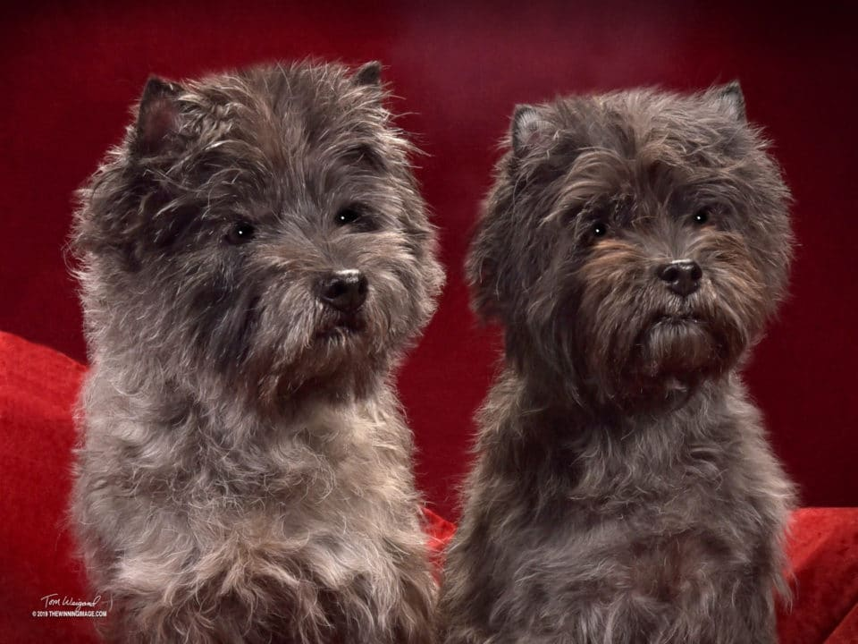 Pair of cute dogs